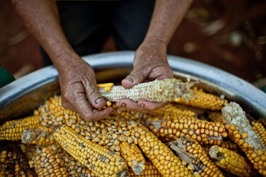 Enfermedad Paraguay La soja mata. Foto: Pablo Tosco / Oxfam