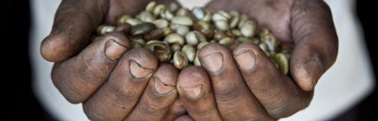 Manos llenas de semillas  - Conferencia Internacional sobre Financiamiento para el Desarrollo. Foto: Oxfam