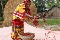 bangladeshcp