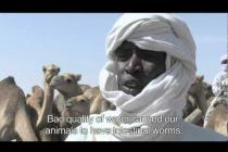 Food crisis in Sahel: the impacts of drought on pastoralist communities in Chad