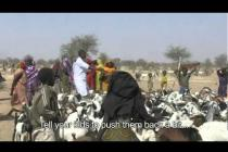 Food crisis in Sahel: veterinary care program in Chad