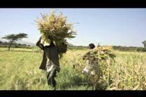 """Un """"tribunal sur le climat"""" en Ethiopie, pour agir contre le changement climatique"""