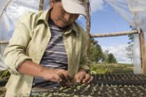Emelina Dominguez, 42 años, trabaja en un invernader de Marcala, La Paz, Honduras. Enero de 2007. Autor: Gilvan Barreto/Oxfam