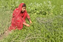 Hakim Mai in her garden. Pakistan. Photo: Oxfam