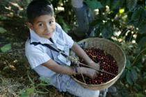 Boy with coofee basket, El Salvador