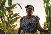 A woman from Dimbaza agricultural cooperative stands next to her crops before harvesting in Ngobozana, Eastern Cape, South Africa
