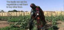 Food crisis in Sahel: A Chad market garden