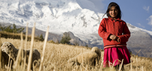 Girl in mountains with sheep, Peru