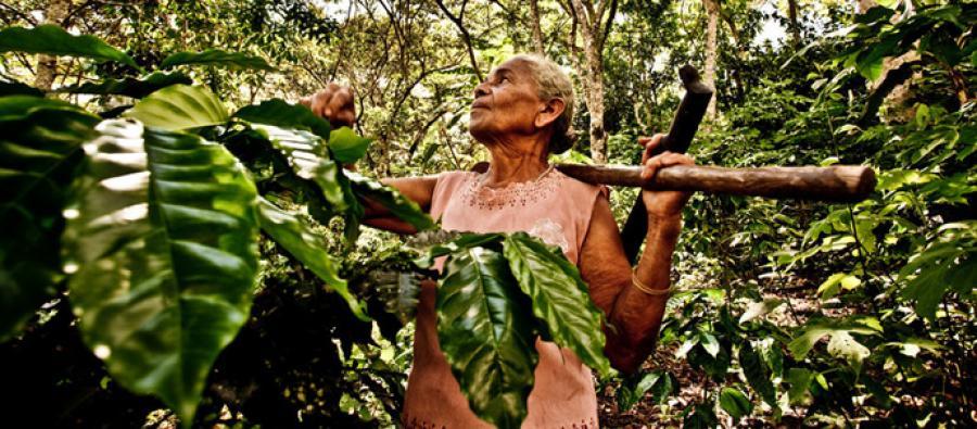Luz Evelia Godines Solano, coffee farmer, in Nicaragua. Credit: Pablo Tosco/Oxfam
