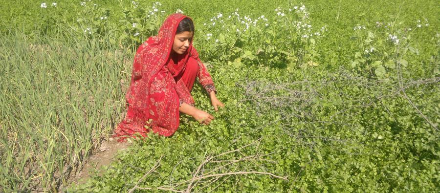 Hakim Mai in her garden. Pakistan. Photo: Oxfam