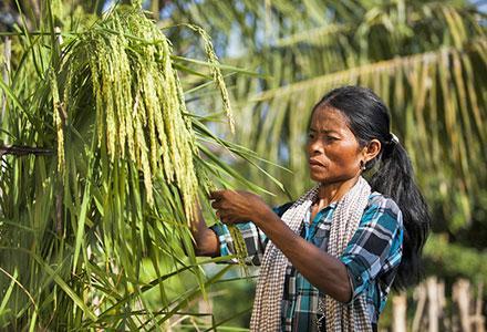 cambodiacp